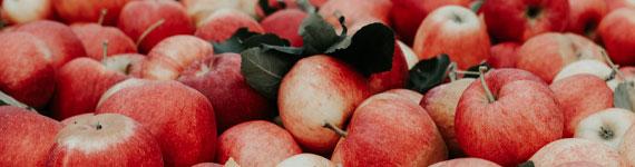 Halika Õunatalu tööpakkumised